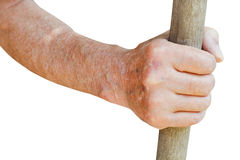 Male hand holds old wooden stalk Stock Photos