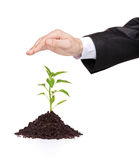 A male hand over a plant protecting it Royalty Free Stock Images