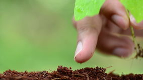 Male hand planting young plant stock video footage