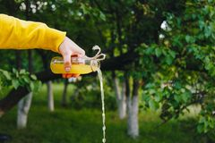 Male hand pours homemade lemonade from a bottle on a background of trees on the nature outdoors. close-up, healthy food, diet, royalty free stock image