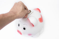Male hand putting a coin into piggy bank no white background Stock Images