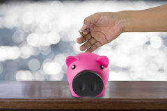 male hand putting a coin into piggy bank. Stock Photo