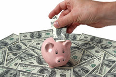 Male hand putting dollars into a piggy bank Stock Image