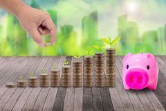 Male hand putting money coins on pile of coins and little tree, Royalty Free Stock Image