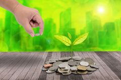 Male hand putting money coins on pile of coins and little tree o Royalty Free Stock Photos