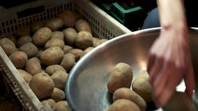Male hand and raw potatoes. Vegetable in a crate stock footage