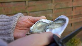 Male hand removes the shell with a fresh oyster. Male hand removes the top of the shell with a fresh open oyster stock video footage