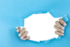 male hand ripped blue paper on white background. Royalty Free Stock Images