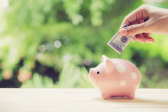 Male hand saving money in a piggybank on nature background. The male hand saving money in a piggybank on nature background Stock Image