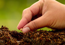 Male hand seeding for planting over green environment Stock Photography