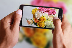 Male hand taking photo of colorful roses with cell, mobile phone. Stock Images