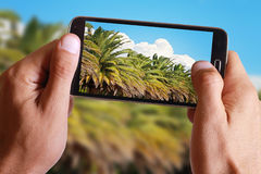 Male hand taking a picture of Palms and clouds with mobile, cell phone Royalty Free Stock Image