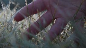 The male hand touches to a frosty grass on a background light of the sun stock footage