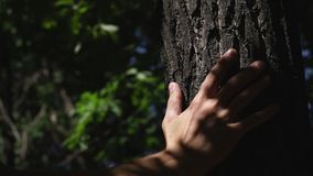 Male hand on a tree trunk. Solar patches of light on a tree. Trunk. Green Tree. Forest. The natural landscape stock video