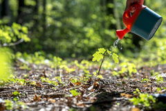 Male hand watering a young plant in the middle of forested area Stock Images