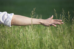 Male hand in wheat field Stock Images