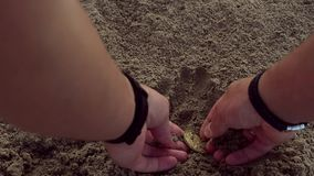 Male hands dig in sand and find gold bitcoin. Buried on the beach. Gold coin as a symbol of cryptocurrency stock video