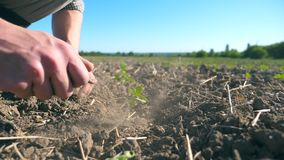 Male hands of farmer planting green sprouts of sunflower on the field at summer season. Side view of young man caring. About small seedlings during drought on stock video