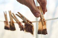 Male hands are hanging used tea bags for drying Stock Photos