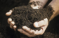 Male hands holding ecologically controlled re-constituted soil in cotton plantation Stock Image