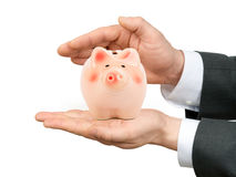 Male hands holding piggy bank Stock Photography