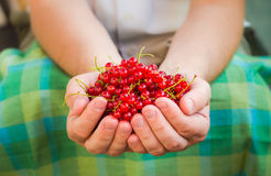 Male hands holding red currant fruit fresh air Stock Photography