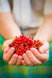 Male hands holding red currant fruit fresh air Royalty Free Stock Image