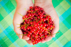 Male hands holding red currant fruit fresh air Royalty Free Stock Photos