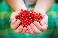 Male hands holding red currant fruit fresh air Stock Photo