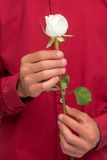 Male hands holding rose Royalty Free Stock Image