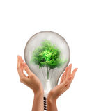 Male hands holding tree. Growing out of electric light bulb. Eco Royalty Free Stock Images