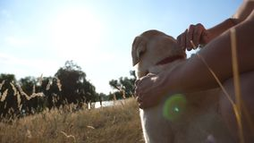 Male hands stroking dog at nature. Labrador or gold retriever sitting on green grass with his owner. Sun rays in
