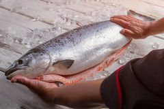 Male hands touch raw fish. Fresh fish on wooden background. Key ingredient for sushi rolls. Chef guarantees the quality Stock Photo