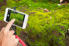 Male hands using mobile smart phone take moss photo. Stock Photo