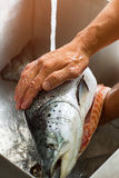 Male hands wash big fish. Royalty Free Stock Photography