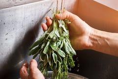 Male hands washing sage. Stock Photo