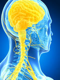 Male highlighted nerve system Royalty Free Stock Photography