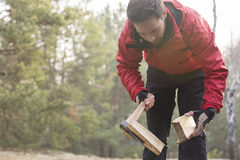 Male hiker cutting firewood in forest Stock Image