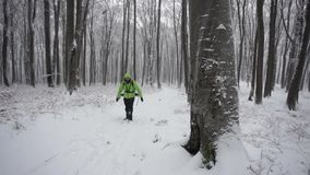 Male hiker in the forest during a winter day. stock video