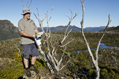 Male hiker reading map in wilderness. Tasmania Royalty Free Stock Image