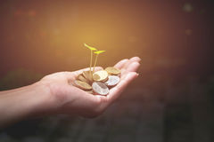 Male holding money gold coins with plant in his hand. For financial and saving money concept stock images