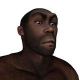 Male homo erectus angry - 3D render. Male homo erectus angry portrait  in white background - 3D render Royalty Free Stock Images