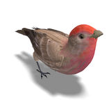 Male House Finch. 3D rendering with clipping path and shadow over white Stock Photo