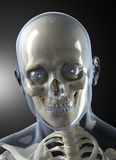 Male Human Head X-ray Front view stock illustration