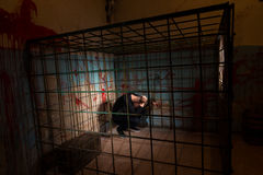 Male imprisoned in a metal cage with a blood splattered wall beh Royalty Free Stock Photography