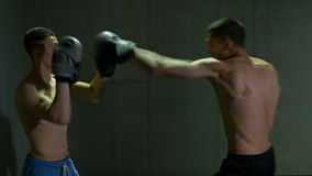 Male kickboxing fighters training in boxing studio with concentration and determination. Two male kickboxing fighters training in boxing studio with stock footage