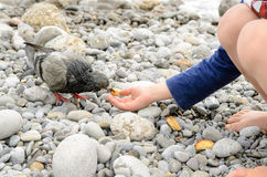 Male Kid Feeding Dove at the Beach Using Hand Royalty Free Stock Photo