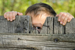 Male Kid Peeking Over a Rustic Wooden Fence. Close up Male Young Kid Peeking Over a Rustic Wooden Fence While Holding the Edge and Staring at the Camera stock photo