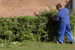 MALE LANDSCAPER. Copenhagen/Denmark/ 03 September   2015_  nale landscapers working on bushes       (Photo by Francis Joseph Dean/Deanpictures Royalty Free Stock Photo
