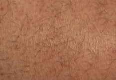 Male leg skin with hair. Natural background and texture Royalty Free Stock Images